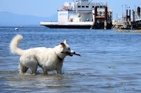 Things to do with <b>Dogs</b> on Salt <b>Spring</b> Island - SaltSpringMarket.com
