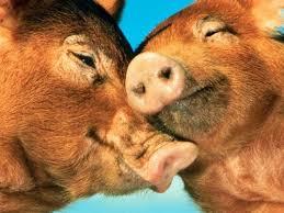תוצאת תמונה עבור love, animals
