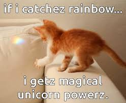 Image result for appropriate cat meme