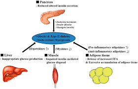 ijms full text metabolic adaptation in obesity and type no