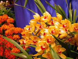 Image result for عکس گل های زیبای جهان