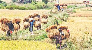food security prospects the daily star food security it s not only about production