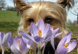 Μου αρέσει να μυρίζω...