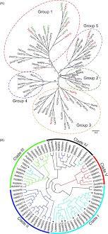 Genome analysis of Taraxacum kok-saghyz Rodin provides <b>new</b> ...