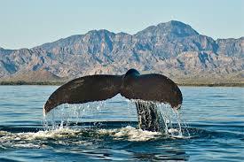 (Área protegida)parque nacional Bahía de Loreto. Images?q=tbn:ANd9GcQdXGX0THJSSnemUHhUvtAG2405-tokGT_o9As_4g6AF91686f9