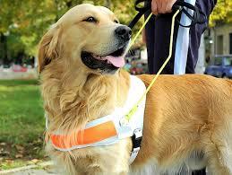 Ποια είναι η χρονική διάρκεια  εργασίας θεραπευτικού σκύλου;