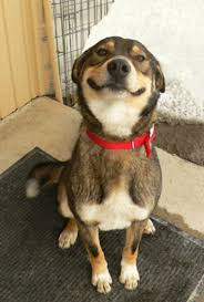 Behold: The 10 Best Dog Smiles on the Internet via Relatably.com