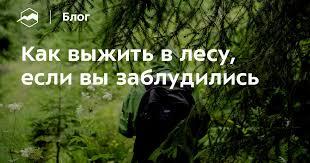 Как выжить в лесу, если вы заблудились — Блог «Спорт ...