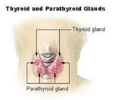 pengobatan pembesaran kelenjar tiroid
