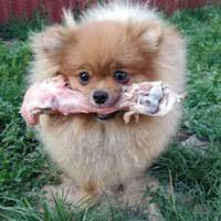 Натуральное здоровое питание собак и кошек.   ВКонтакте