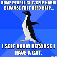 I bleed, therefore I have a cat. - Meme on Imgur via Relatably.com