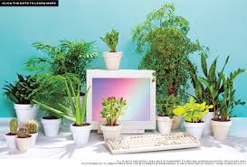 best desk plants 12 for the office bloomberg best office plants no sunlight