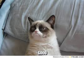good... - grumpy cat Meme Generator Captionator via Relatably.com