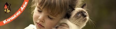 <b>КОШКИН ДОМ</b> - помощь бездомным кошкам Ульяновска ...