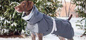 Одежда для собак - утепляться или нет? - интернет-магазин ...