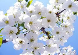 Resultado de imagen de flor lila significado de color blanco