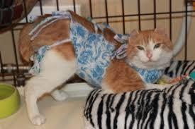 Помощь моим подопечным кошкам - Страница 9 - НГС.Форум в ...