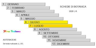 Serratula nudicaulis [Serratula a fusto nudo] - Flora Italiana