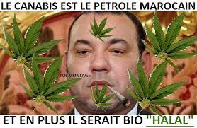"""Résultat de recherche d'images pour """"selon l'onu le maroc est le plus grand producteur de cannabis du monde"""""""