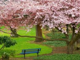 لكل محبي صور الطبيعة  اكبر تجميع لصور الطبيعة Images?q=tbn:ANd9GcQfOzvKJyj6ibT8g49GPXqkD00FbM1eAPmoI0DNLGqna1wSn8EXnA