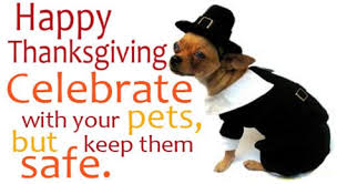 Image result for thanksgiving dog