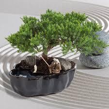 zen reflections bonsai tree office table