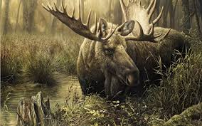 Image result for Wild Animals game