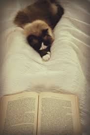 best images about library cats dogs good books 17 best images about library cats dogs good books bedtime stories and kittens