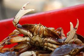Delayed Dungeness crab season sinks catch, sales for California ...