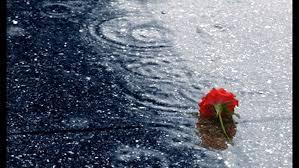 Image result for mưa