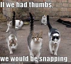 Funny Photo: Dream Cats - Parent Society via Relatably.com