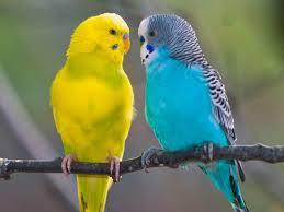 kuş resimleri ile ilgili görsel sonucu