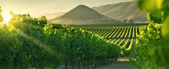 Image result for central coast wineries