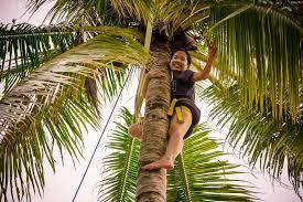 coconut tree essay term paper service coconut tree essay