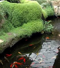 diy patio pond: garden pond fish patio garden ponds garden pond fish