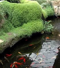 diy patio pond: garden pond fish patio garden ponds garden pond fish