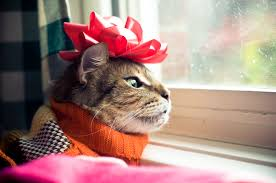 Image result for Christmas Cat