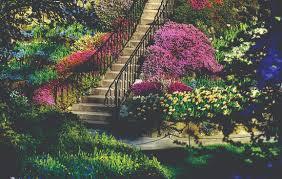 Resultado de imagem para belos jardins
