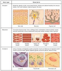 connective tissue types of essays connective tissue