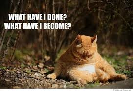 Fat Cat Meme | WeKnowMemes via Relatably.com