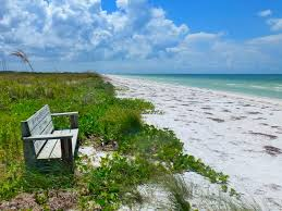 Image result for honeymoon island rocky beach