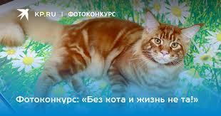 Фотоконкурс: «<b>Без кота</b> и жизнь не та!»