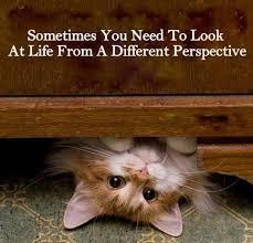 Image result for perspective quotes