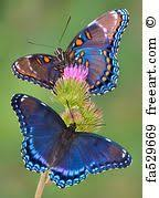 Maravillosamente bonita!! | <b>Butterflies</b> & Moths | Beautiful <b>butterflies</b> ...