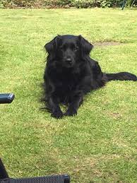wag time dog groomers wilmslow in wilmslow cheshire gumtree wag time dog groomers wilmslow