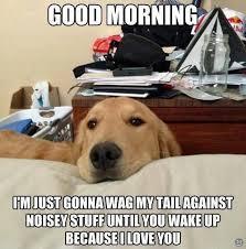 Perritos on Pinterest | Golden Puppy, Golden Retrievers and Dog Memes via Relatably.com