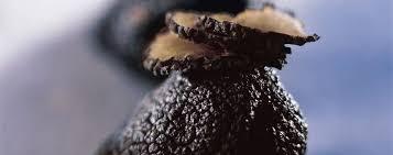 """Résultat de recherche d'images pour """"truffe noire"""""""