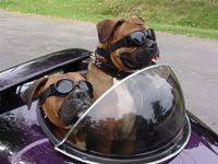 11 Best <b>DOGS</b> images in 2013 | <b>Dogs</b>, I love <b>dogs</b>, Cute animals