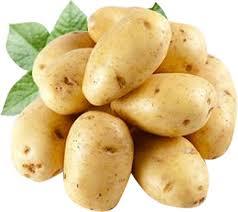 На Ставрополье фермеры собрали небывалый урожай картофеля