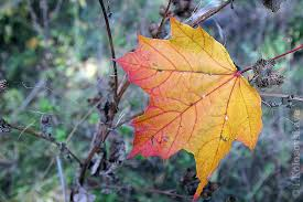 More About Autumn s Colors